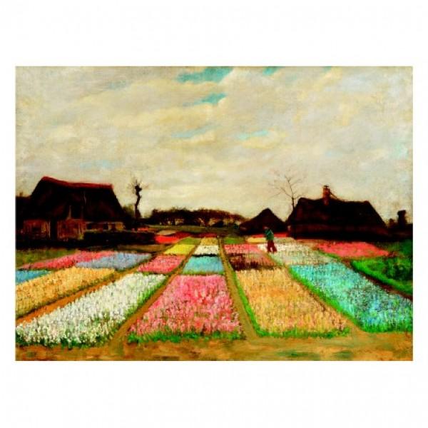 109. Цветните леги в Холандия. 66х48,9